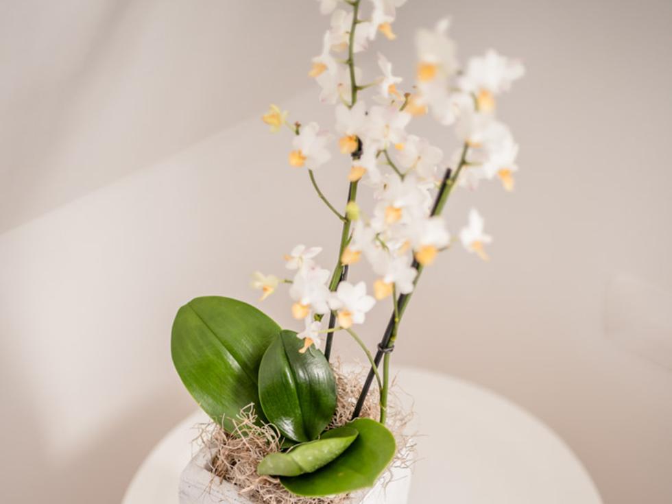Turmsuite-Blumen
